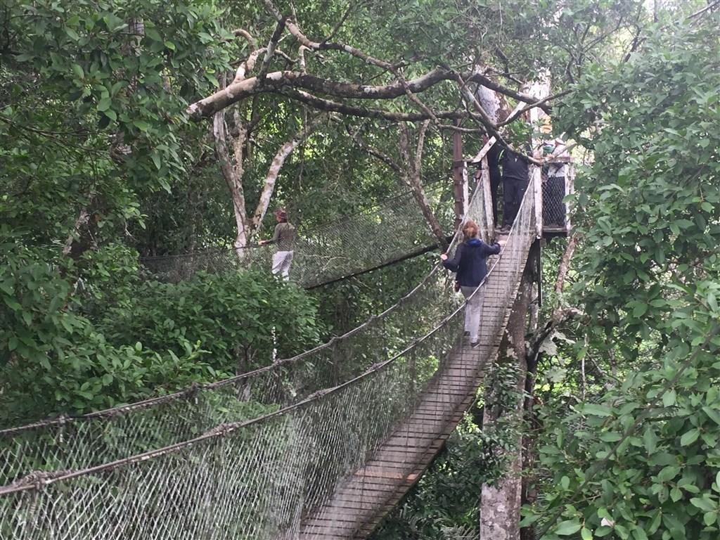 Amazonie - Canopy tour