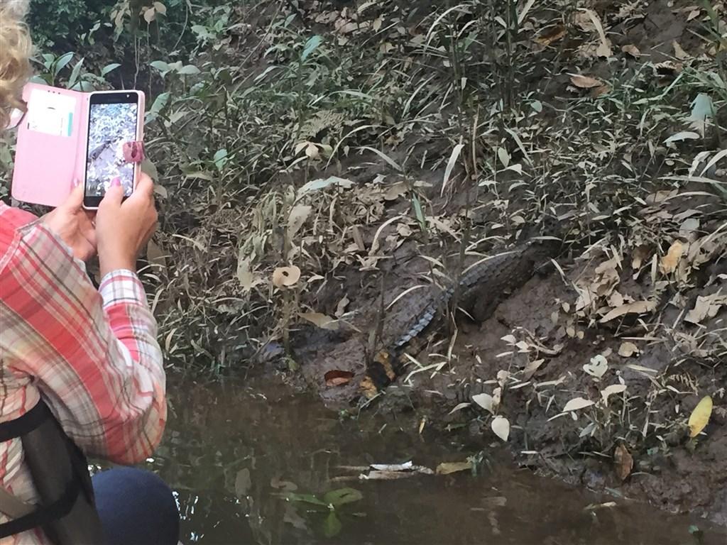 Amazonie - pozorování kajmanů