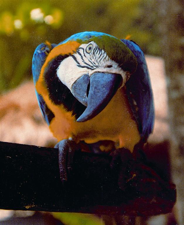 Iguacu - ptačí park