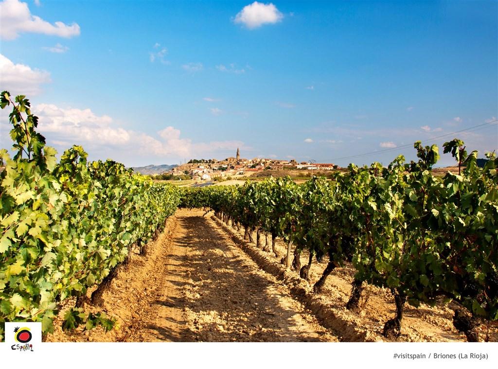 Rioja, vinice Briones